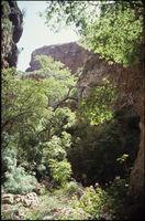 Baviaanskloof forested gorge