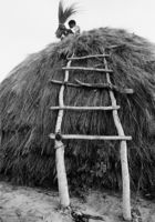 Thatching a hut