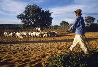 Farmer with  goats