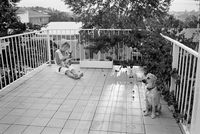 Frances with dogs, Johannesburg, South Africa
