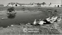 Zandvliet's polluted werf
