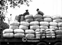 Two men rest on sacks of grain  on the back of a truck, Cape Town