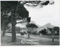 A street in Meadowridge, Cape Town