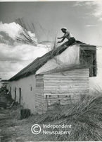 Thatching, Blouberg, Cape Town