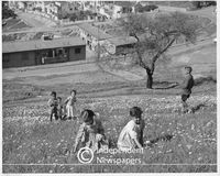 Children picking spring daisies, Malay Quarter, Cape Town, 1960