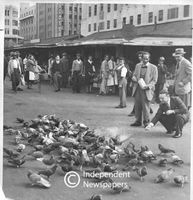 Feeding pigeons on the Grand Parade, Cape Town, 1952