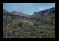 Image from rock painting site. Site of Kloof Route South, South Africa.