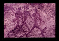 Image from rock painting site. Site of Langkloof, Klein Karoo, South Africa.