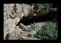Image from rock painting site. Site of Bushman cave, near Calitzdorp, South Africa.