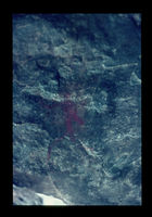 Image from rock painting site. Site of Bergplaas State Forest, George, South Africa.
