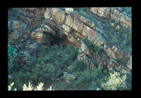 Image from rock painting site. Site of  Rooielskloof 1, Oudtshoorn, South Africa.