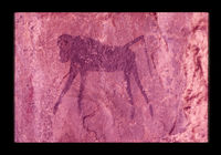 Image from rock painting site. Site of Nooitgedacht 3, Oudtshoorn, Western Cape, South Africa.