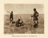 Women digging for roots at Malatswai, B.P.
