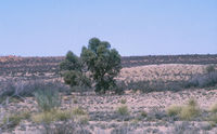 Vegetation inside the Kgalagadi Transfrontier Park.