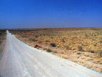 A road through the Kgalagadi Transfrontier Park