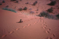 Unidentified San child [possibly Abu (surname unknown)] plays among the dunes near a graveyard