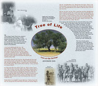 ǂKhomani San : Tree of Family : trees are our heritage