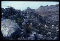 Cederberg Wilderness Area