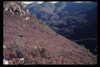 Southern slopes of Langeberg