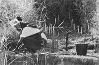 Searching for land mines, Caxito, Angola
