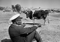 Cow and trombone, Alexandra township, 1951