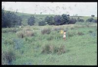 Looking north north east, 98/81 [Farm Highveld - bottomland on Mtoti River][192]