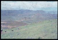 Looking west over Upper Tugela Location from vicinity of 129/81 [Nooitgedacht - just above Stulwane River][223]