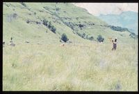 148/81 [Giant's Castle Game Reserve Little Tugela Valley - Solitude - North facing slopes][242]