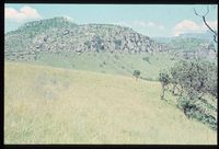 Plots in vicinity of plot 147/81 looking west to Protea caffra community on ridge that forms southern boundary of key area [Giant's Castle Game Reserve Little Tugela Valley north slopes vicinity Solitude Camp][241]
