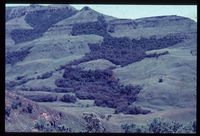 Wonder Valley looking north east. Wattle invading indigenous forest
