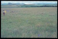 106/81 [Farm Noodhulp 1240 ' 500m north north east of Winterton/Gourton road]