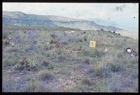 78/81 [Summit of Kope above thesahuis on Delta above Tugela River -most north east peak of Key Area]. Above Bonjaneni?