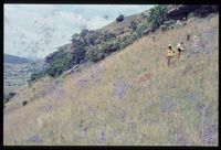 80/81 [The Delta -just below 4410tf on east face slope above mlambonja]