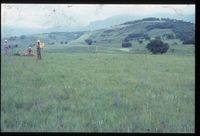 117/81 [Driefontein Tuygay's - above (i.e. north) of Elangeni]