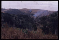 Forest destruction near Hluleka