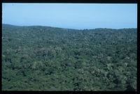 Alexandria Forest
