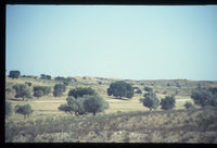 Auob Valley, Kalahari Gemsbok National Park