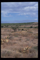Ayanda's site, degraded thicket