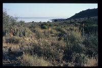 Aloe microstigma, Lake Mentz, Addo Elephant National Park