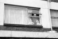 Man and poodles looking out apartment window, Johannesburg, South Africa