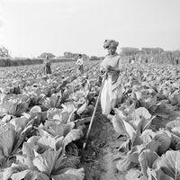 Farmworker, Vuyiswa, 1996