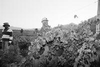 Farming in Tulbagh, 1996