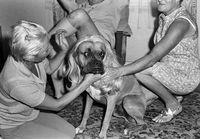 Women putting a female wig on a dog