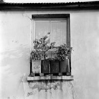 Potplants on the windowsill of a home, District Six, Cape Town, South Africa