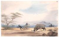 Rhinoceros Shooting