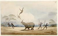 Bushman attacking a Rhinoseros