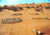 A graveyard outside a former Bushmen settlement near Twee Rivieren.