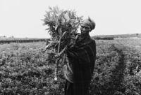Farming, Mpukonyoni