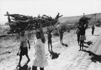Carrying firewood, Bophuthatswana
