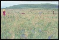 101/81. Looking east north east [Farm Bergvlei north west of Nkonyana farm][195]